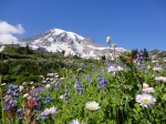 Breathtaking scenery at Mt. Rainier!