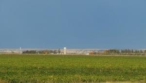 Beet field
