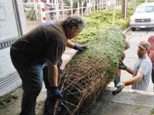 Tree Unload