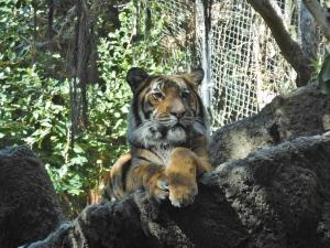 zoo (18)