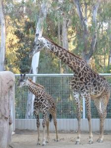 zoo (50)